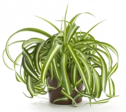 Топ-10 растений для детской комнаты