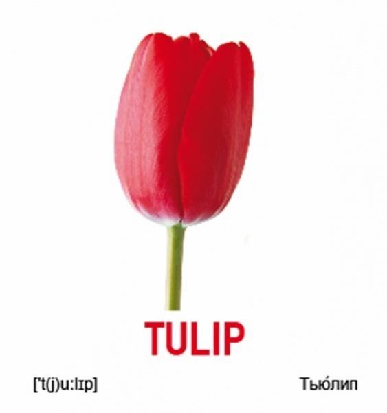 возможность картинки цветов тюльпан ромашка василек гвоздика подсолнух устройства приманок