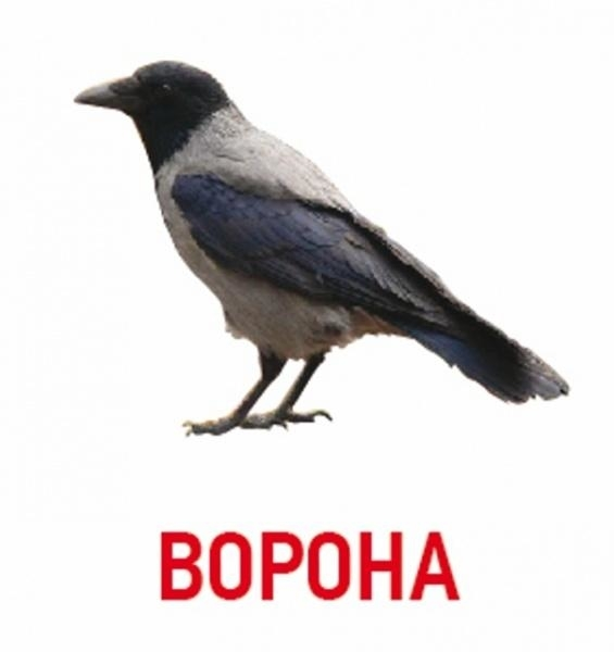 Картинки ворона с надписью