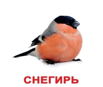 Карточки Домана Вундеркинд с пеленок Птицы с фактами (русский) Вундеркинд с пеленок