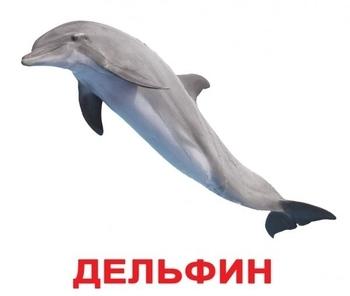 Карточки Домана Вундеркинд с пеленок Обитатели воды с фактами (русский) Вундеркинд с пеленок